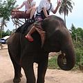 大象的觸感真奇妙
