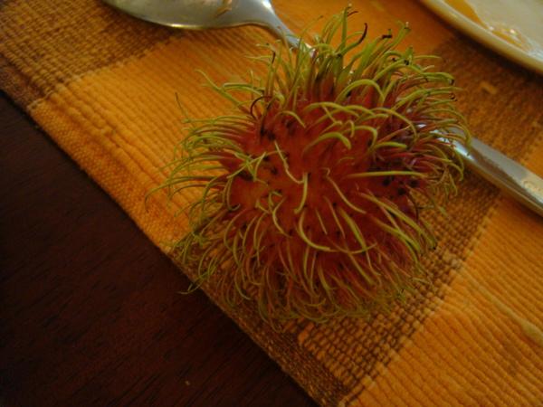 泰國特有的紅毛丹
