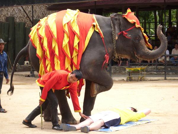 大象要踩小飛象囉~