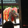 大象搖呼拉圈
