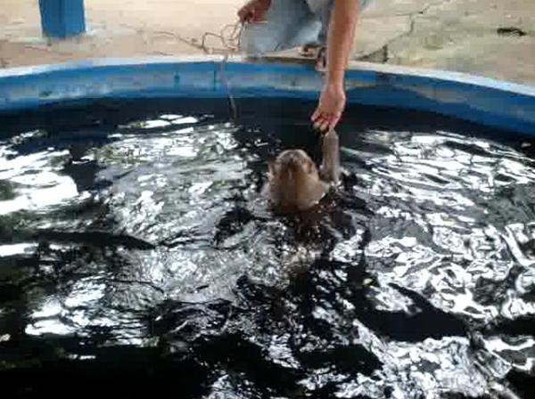 猴子潛水拿錢