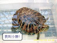 96小祿-1.jpg