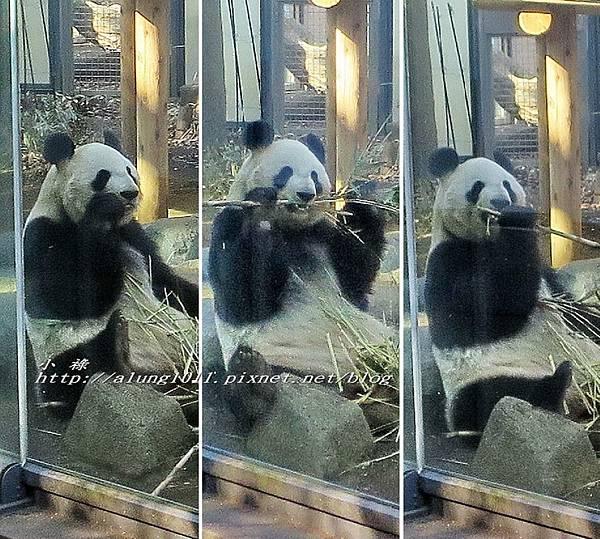 上野動物園 (10).jpg