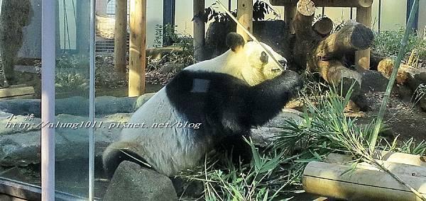 上野動物園 (9).jpg
