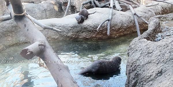 上野動物園 (16).jpg