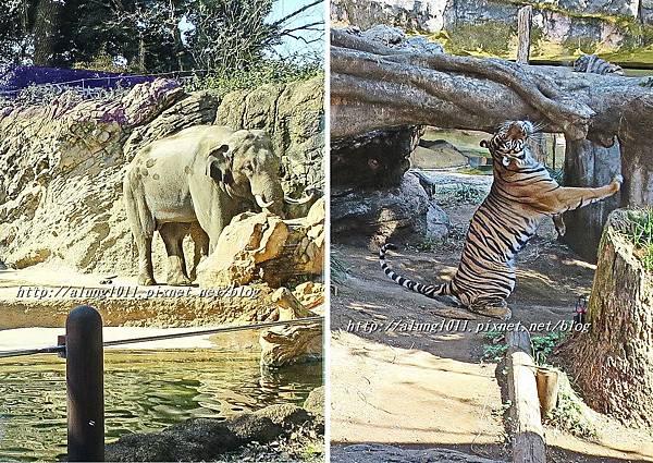 上野動物園 (19).jpg