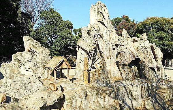 上野動物園 (32).JPG
