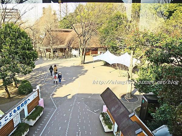 上野動物園 (46).JPG