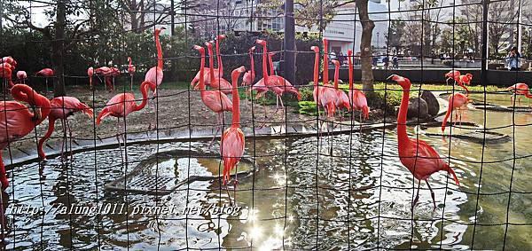 上野動物園 (53).JPG