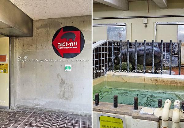 上野動物園 (56).jpg
