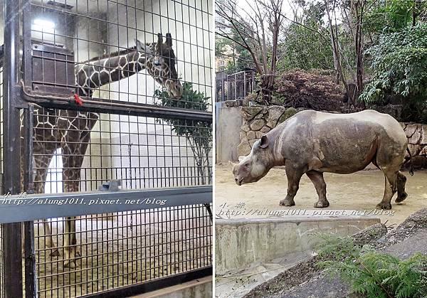 上野動物園 (57).jpg