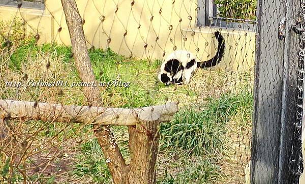 上野動物園 (66).JPG