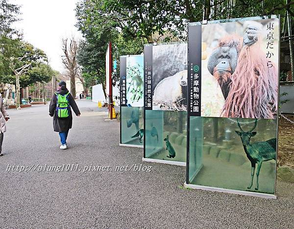 上野動物園 (73).JPG