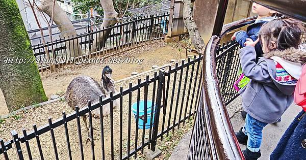 上野動物園 (68).JPG