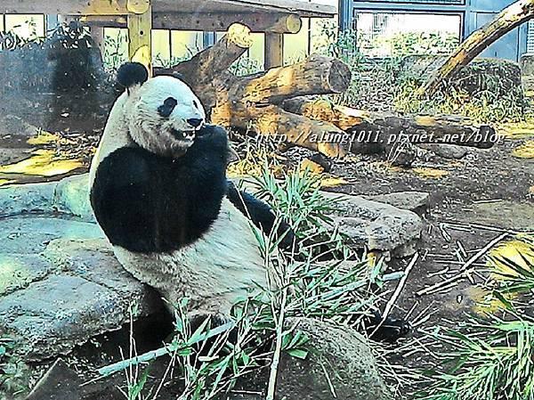上野動物園 (76).jpg