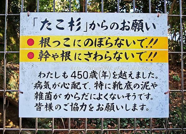 登高尾山 (8).JPG