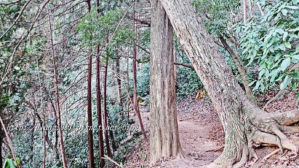 登高尾山 (68).JPG