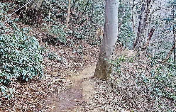 登高尾山 (72).JPG