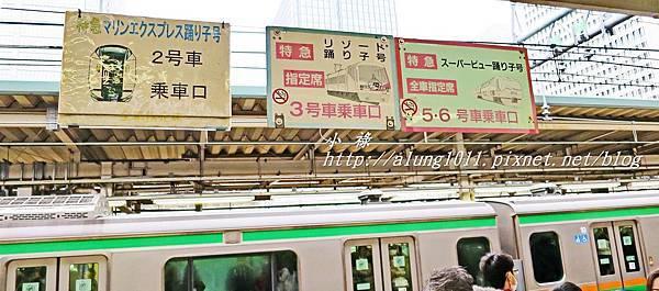 河津櫻祭 (4).JPG