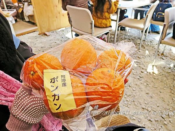 河津櫻祭 (31).JPG