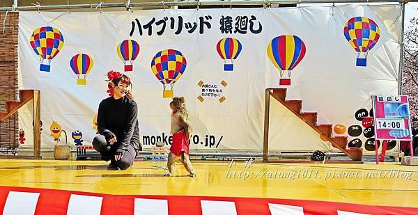 河津櫻祭 (40).JPG
