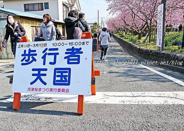 河津櫻祭 (42).JPG
