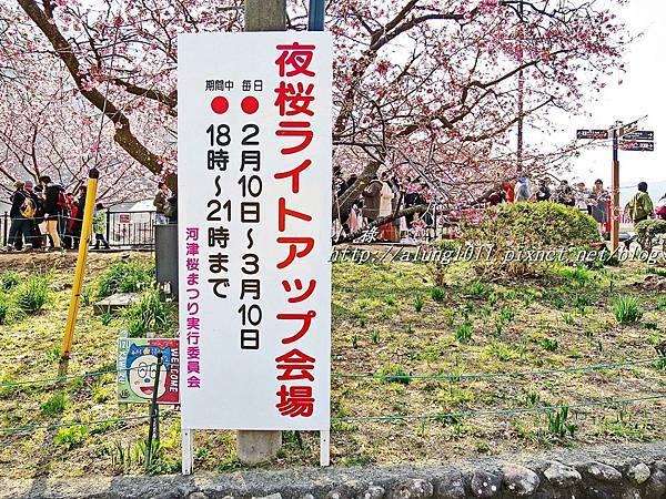 河津櫻祭 (43).JPG
