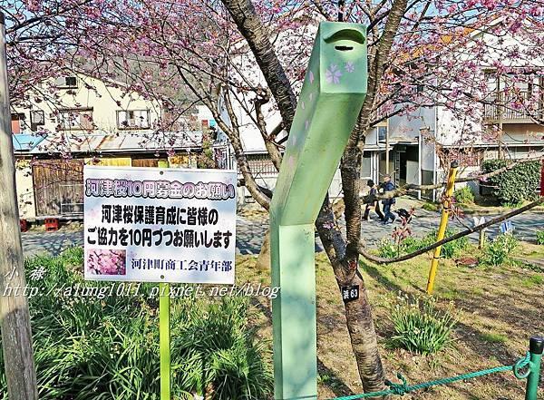 河津櫻祭 (54).JPG