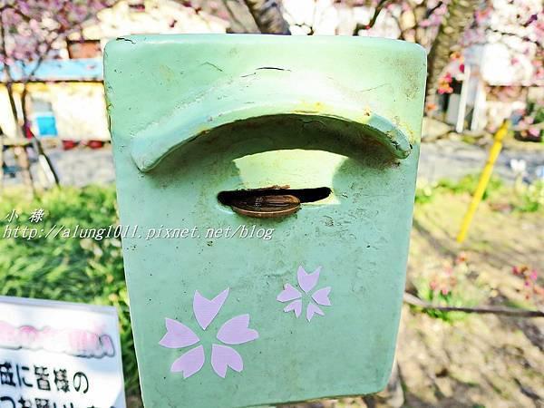 河津櫻祭 (55).JPG