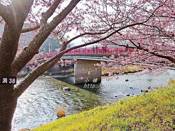 河津櫻祭 (57).JPG