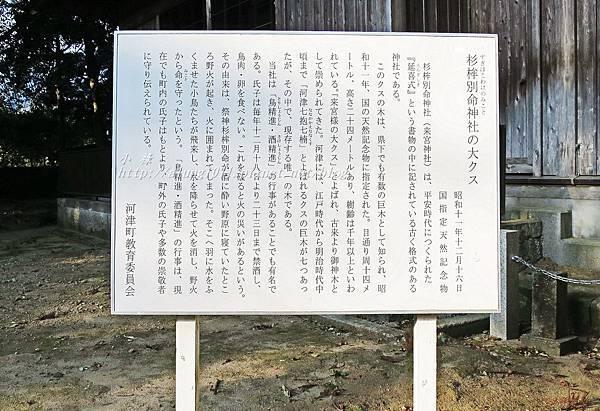 河津櫻祭 (77).JPG