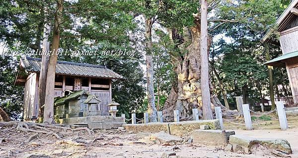 河津櫻祭 (81).JPG
