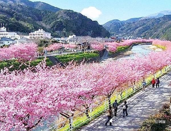 河津櫻祭 (90).jpg