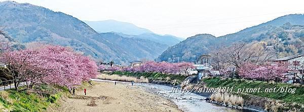 河津櫻祭 (86).jpg