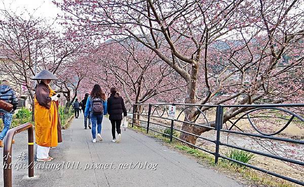 河津櫻祭 (87).jpg