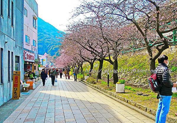 河津櫻祭 (13).JPG