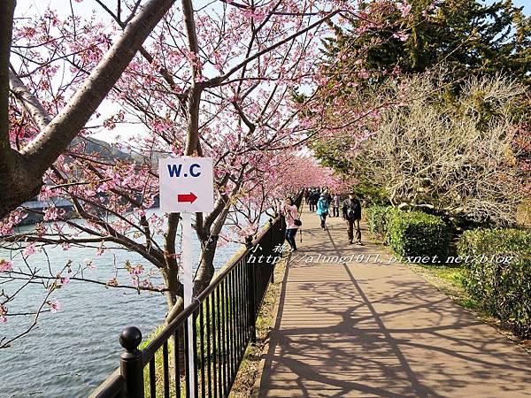 河津櫻祭 (103).jpg