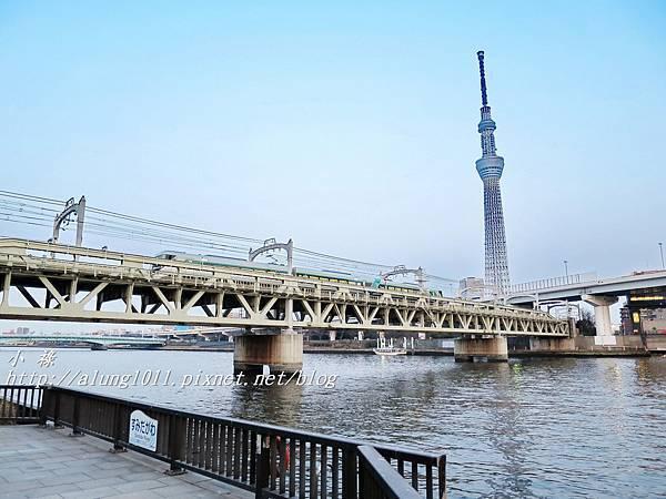 夜櫻船遊隅田川 (1).JPG