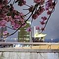 夜櫻船遊隅田川 (48).JPG