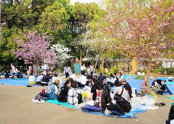 東京櫻花集錦 (14).jpg