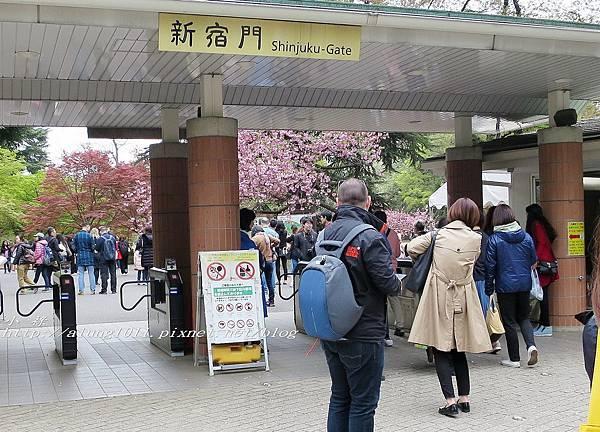 東京櫻花集錦 (22).jpg