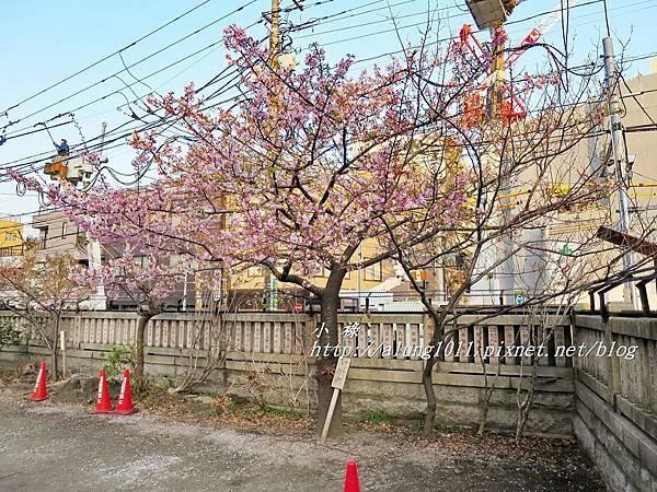 今戶神社 (30).JPG