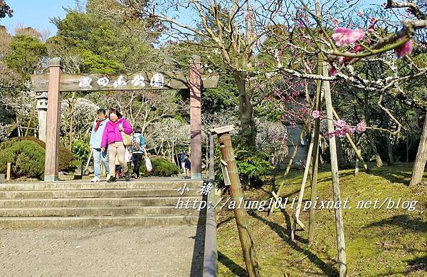 成田山梅祭 (5).JPG