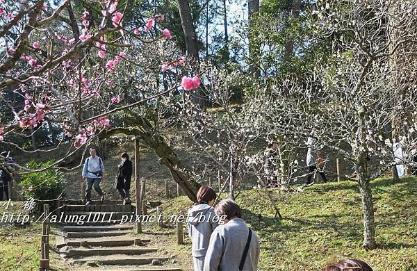 成田山梅祭 (30).JPG