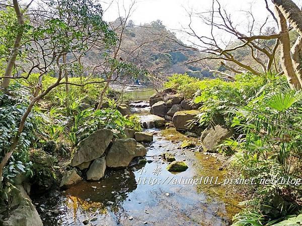 成田山梅祭 (44).JPG