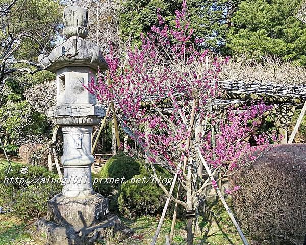 成田山梅祭 (47).JPG