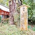 香取神宮 (43).JPG