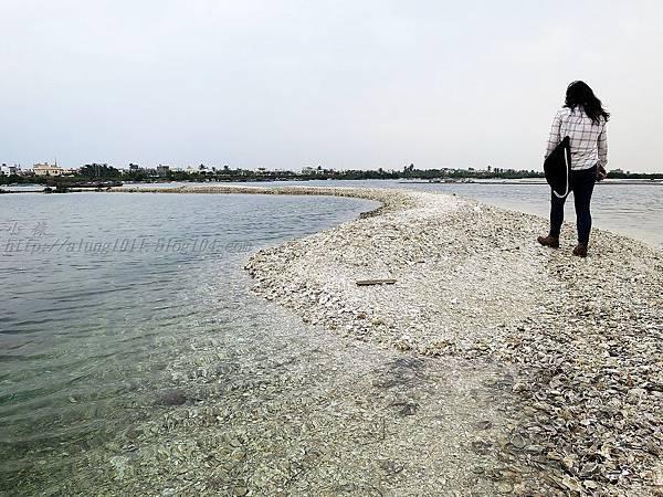 蚵殼島 (56).JPG