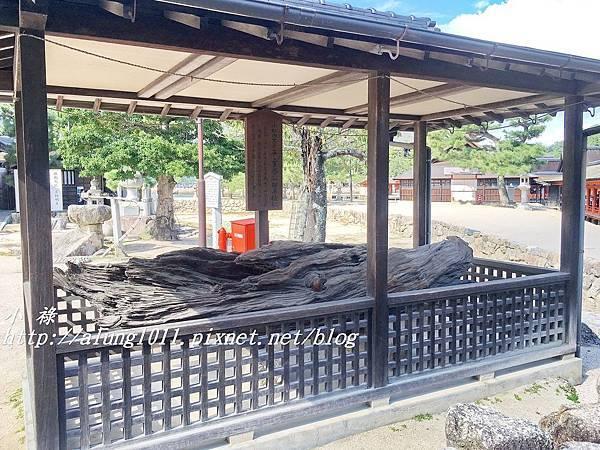 大願寺 (1).JPG