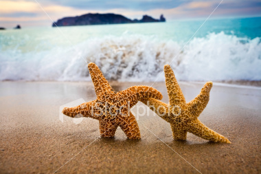 ist2_5076340-in-the-mood-for-love-couple-of-starfish.jpg